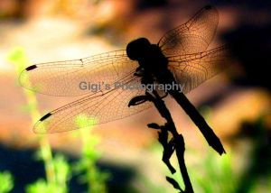 Dragonfly_image